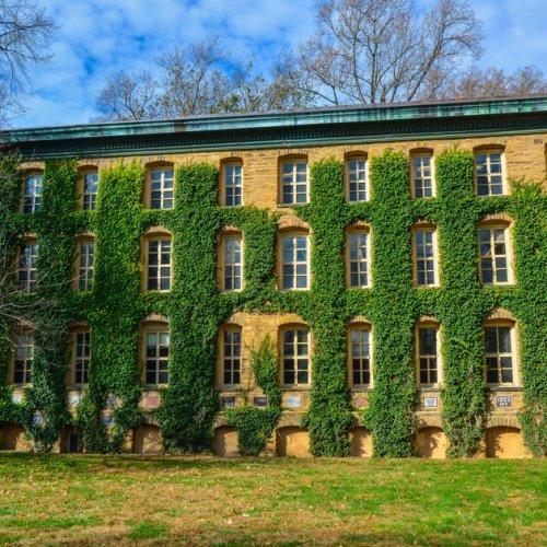 Princeton,,Nj,Usa,-,Novenber,12,,2019:,Green,Ivy,Growth