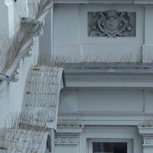 Anti-bird,Spikes,On,Wide,Windowsills,Renovated,Houses
